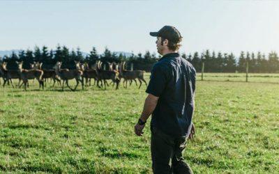 Grasgevoerd Nieuw-Zeelands boerderijhert